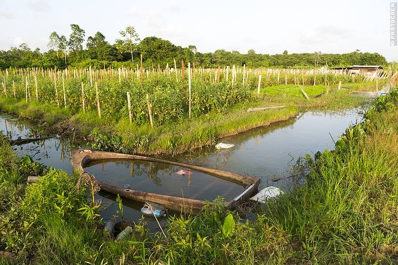 Surroundings of Sukh Dhaam's Children's Home in Suriname (©photocoen)