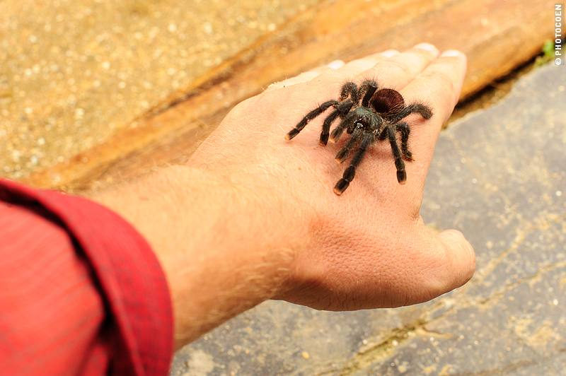 Animal Life in Suriname (©photocoen)