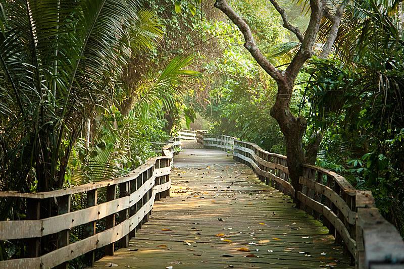 Canopy Walkway, Pakaas Jungle Lodge in Brazil (©photocoen)