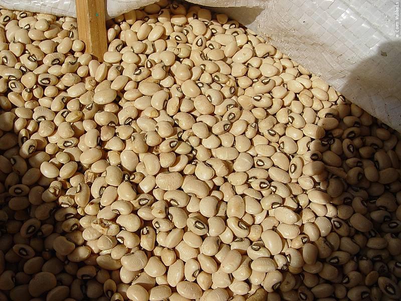 White Beans, Brazil (©photocoen)