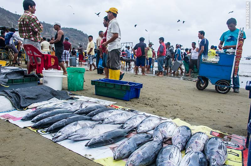 Fish Market in Puerto Lopez, Ecuador (©photocoen)