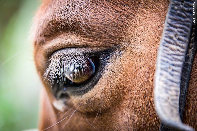 Horse at Hacienda Zuleta, Ecuador (©photocoen)