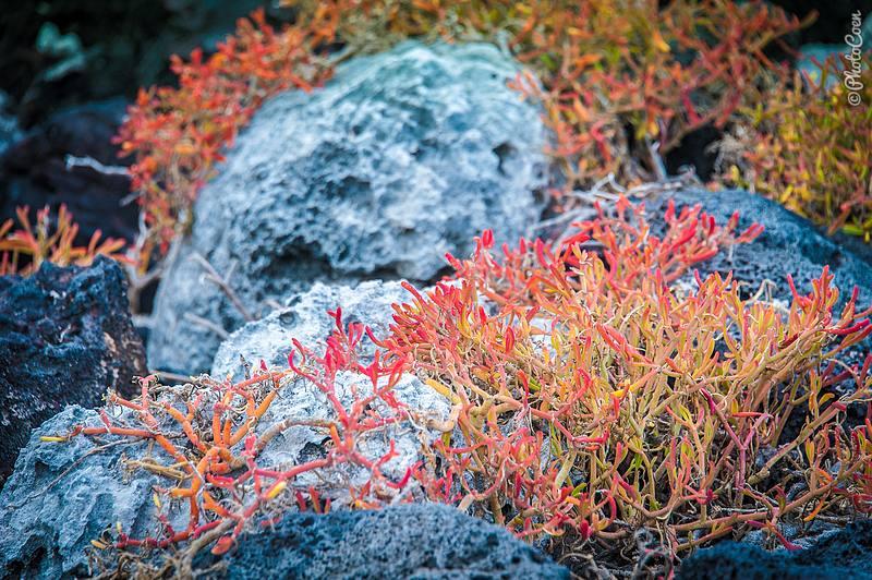 Red algae.