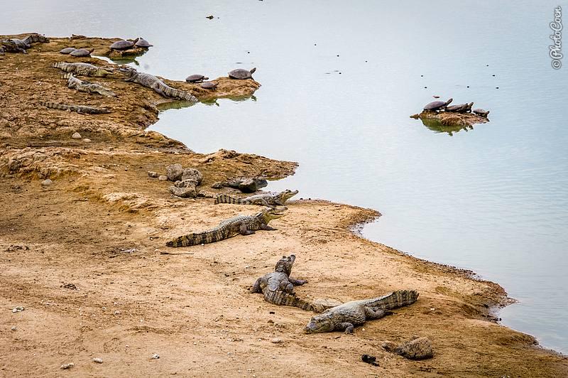 Wildlife Galore at Hato Marisela (photocoen)