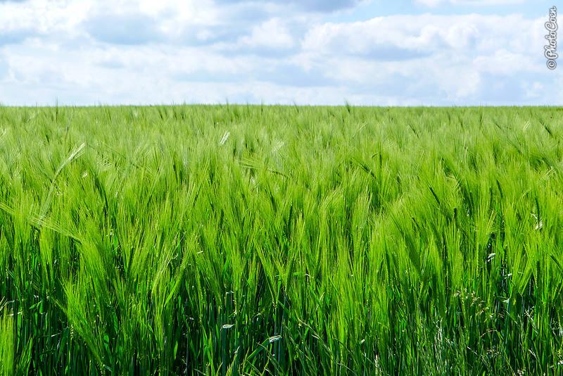 French countryside (©Karin-Marijke Vis)