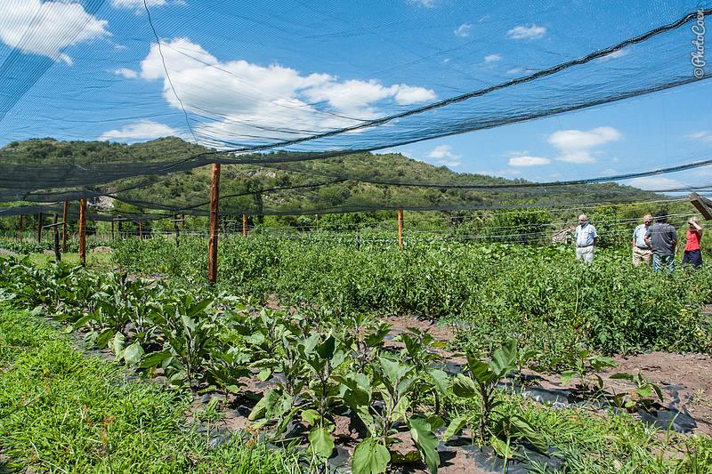 Ecological Vegetable Garden at Cadonga, Argentina (©photocoen)