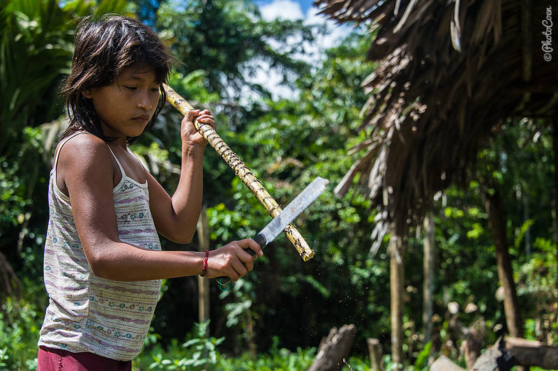 Traditional way: Warao girl cutting sugar cane to snack on.