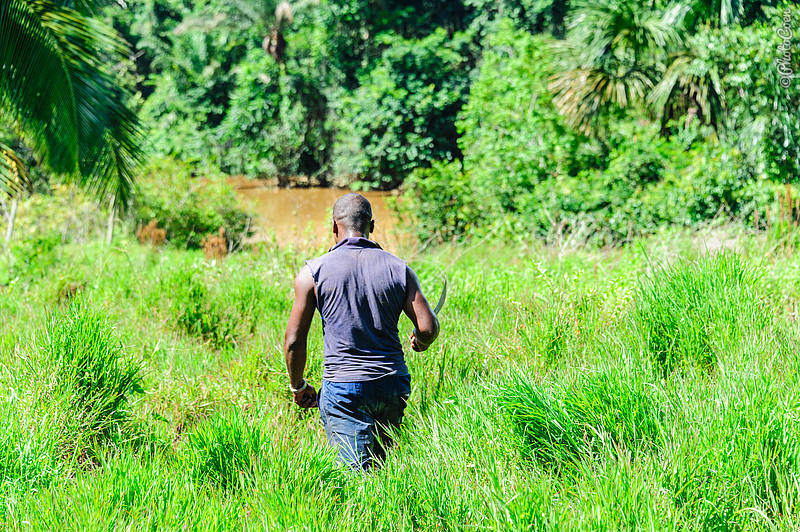 Guyana countryside (©photocoen)