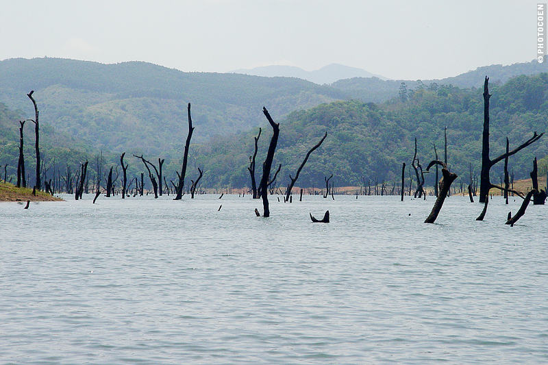 The Periyar Wildlife Sanctuary in India - a lake with dead tree trunks.