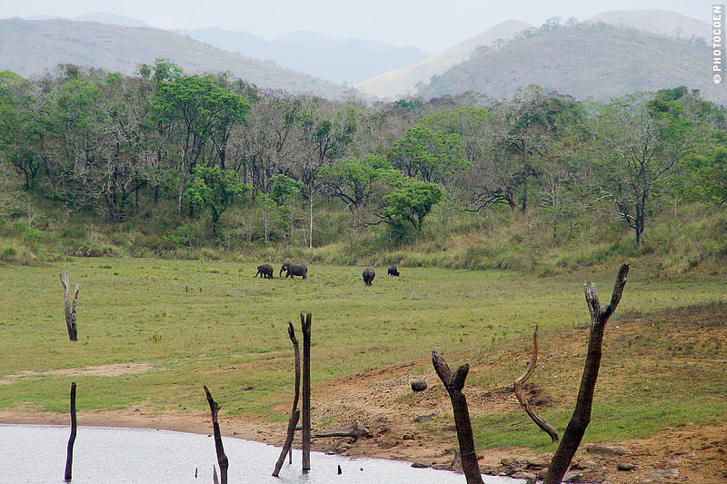 The Periyar Wildlife Sanctuary - four elephants on the shore