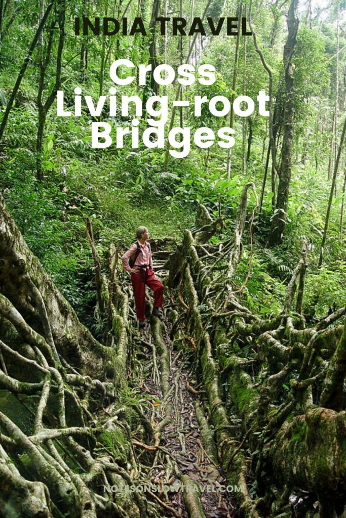 Meghalaya Living-root Bridges
