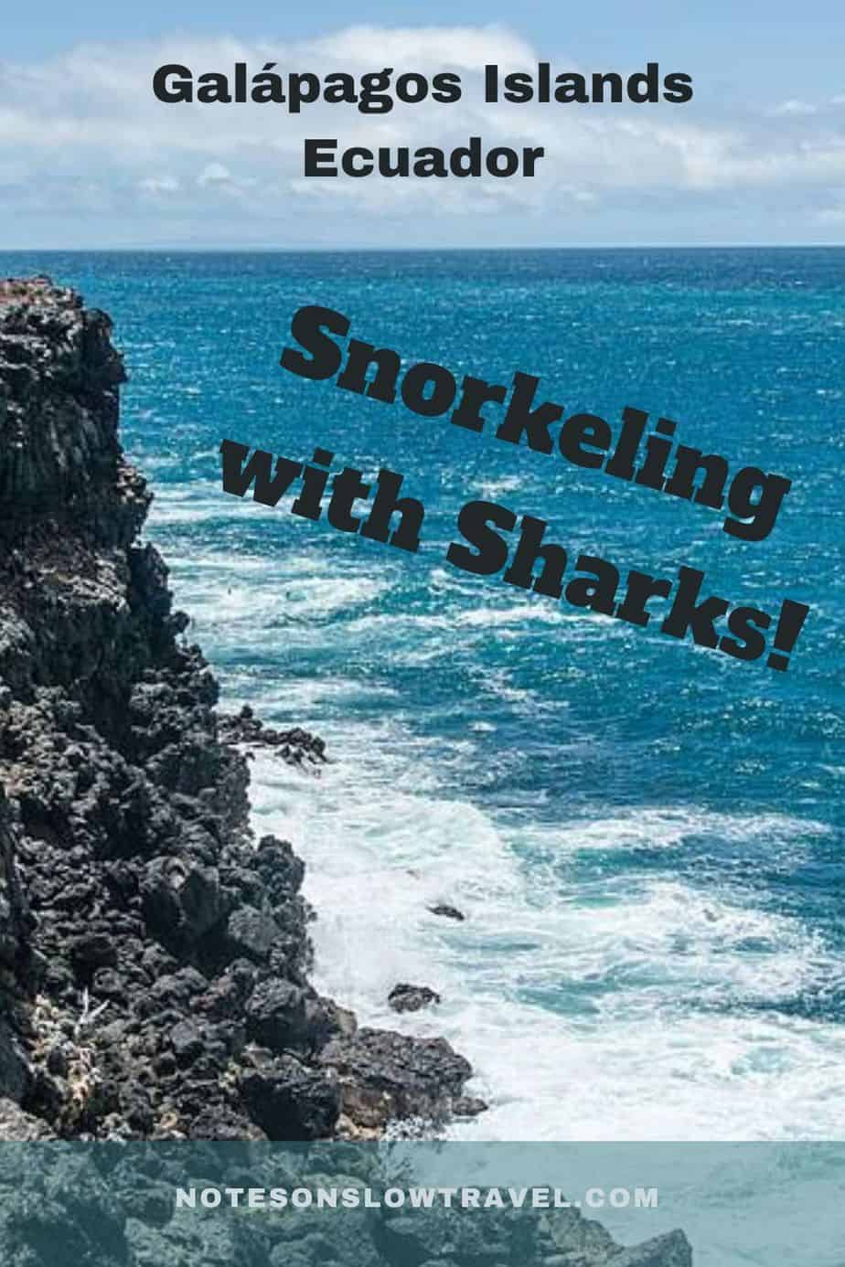 Snorkeling with sharks, Ecuador