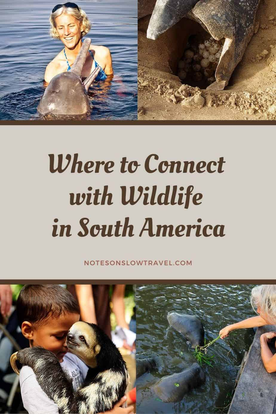 Wildlife in South America