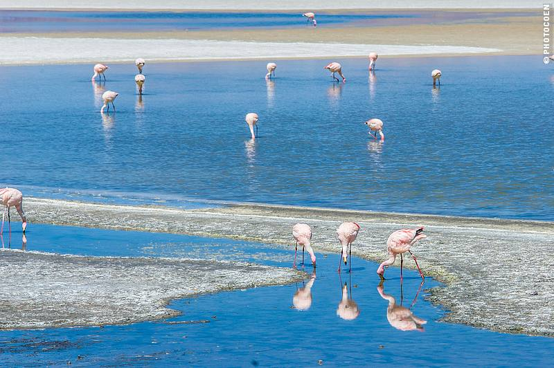 Altiplano and flamingoes in Chile